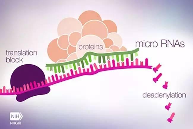 miRNA治疗开启癌症治疗的新时代
