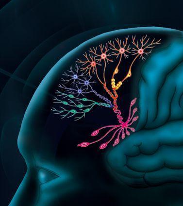GeneMail日报 | 中国科学家揭示神经元分化机制;北大医疗联手腾讯