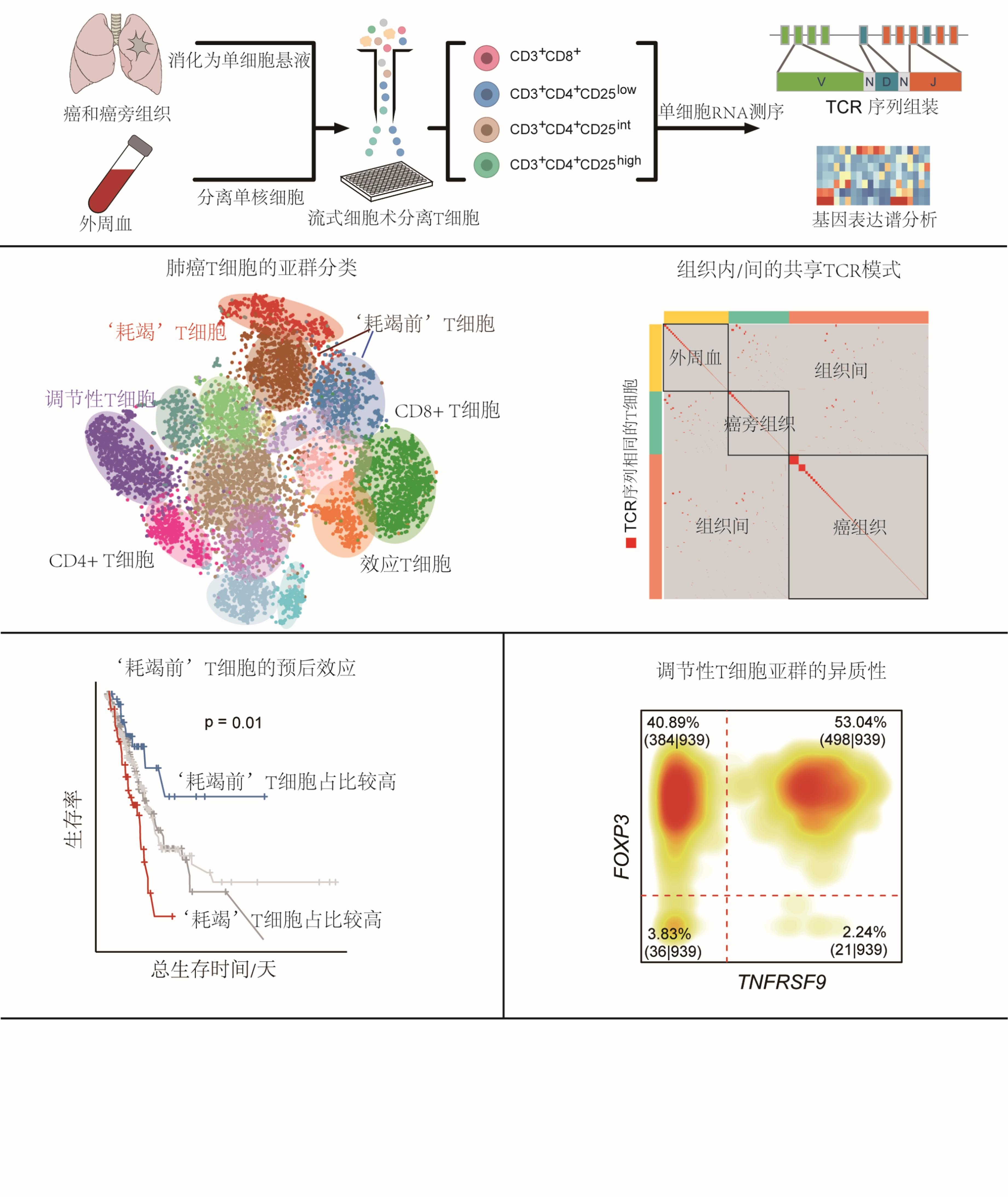 今晨,中国学者发布最大规模肺癌免疫图谱